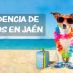 Residencia de perros en Jaén